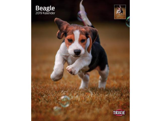 Calendar Beagle 12548