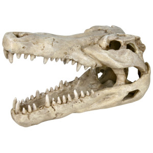 Decor Craniu Crocodil 14 cm 8712
