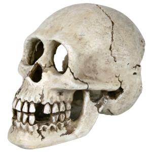 Decor Craniu 15 cm 8713