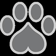 exotick logo